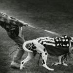 "July 4, 1988: Tyson Weaver, 7, of Wenham had a tough time holding his Dalmation ""Fenimore"" in place at the judging area for large size patriotic pets at a Fourth of July Festival at Patton Park in South Hamilton. He and his dog won first place."